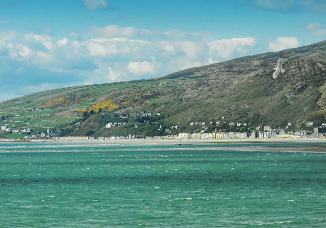 ... above the emerald Sea ... Wales Aberdovey Estuary Seagull Hills Sometime Irish Sea Bird Town Seaside Shore Seascape Water Mar Mare Море Waves Чайка