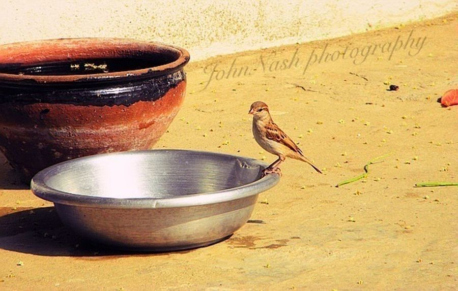 IPhoneography Birds Nature_collection EyeEm Nature Lover