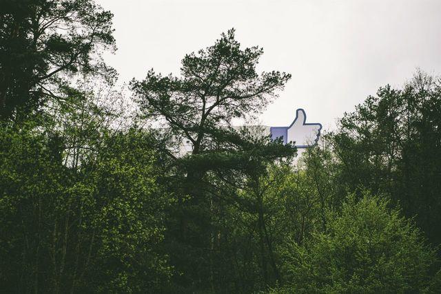 Mushroom Forest Likes EyeEm Lithuania Strange | EyeEm