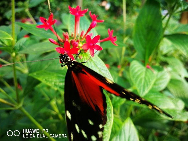 :) Whipsnade Zoo Flower Fragility Animal Themes Beauty In Nature