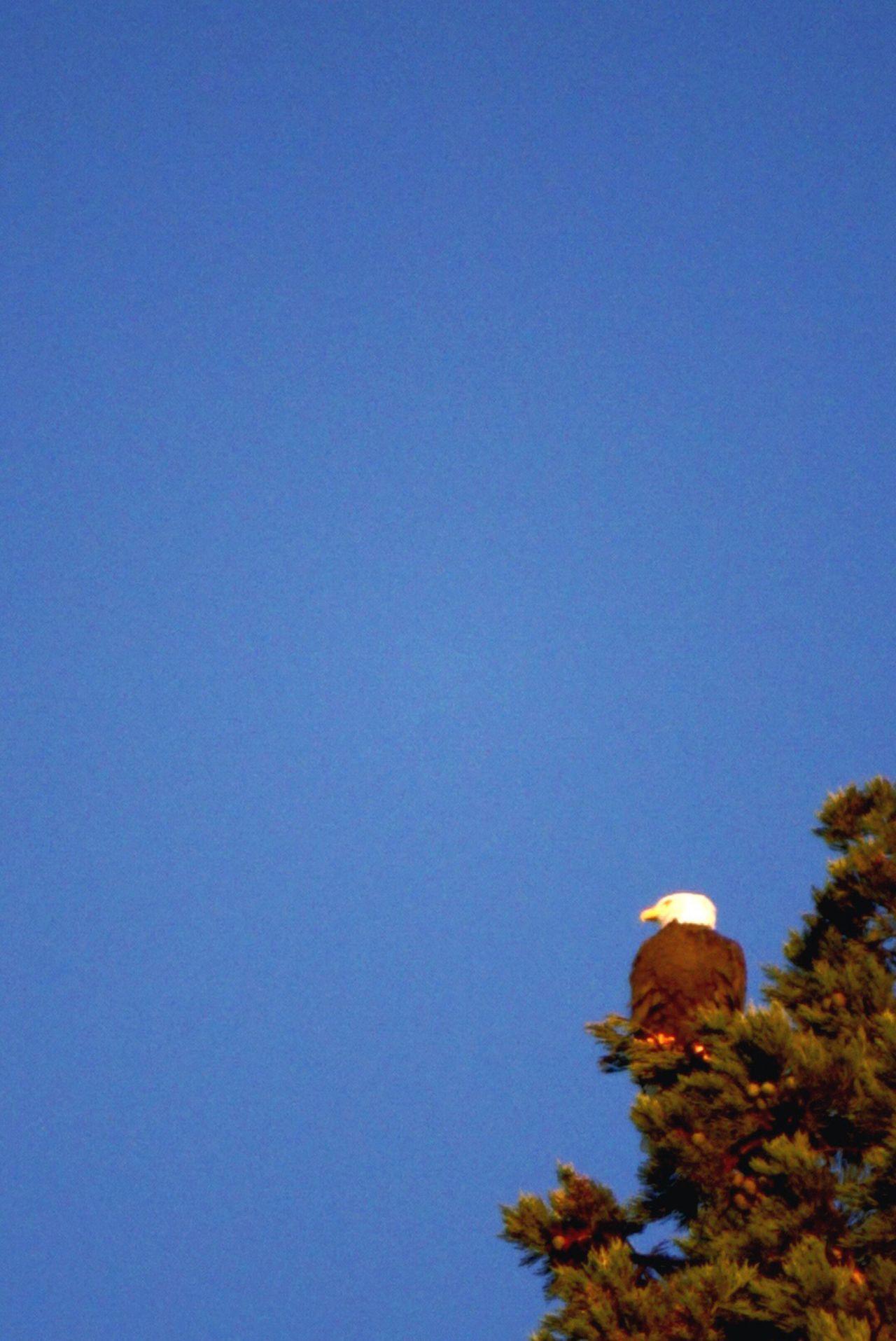 Eagle Fresh Air United States Eagle Animals Seattle Popular Photos EyeEm Birds Birds