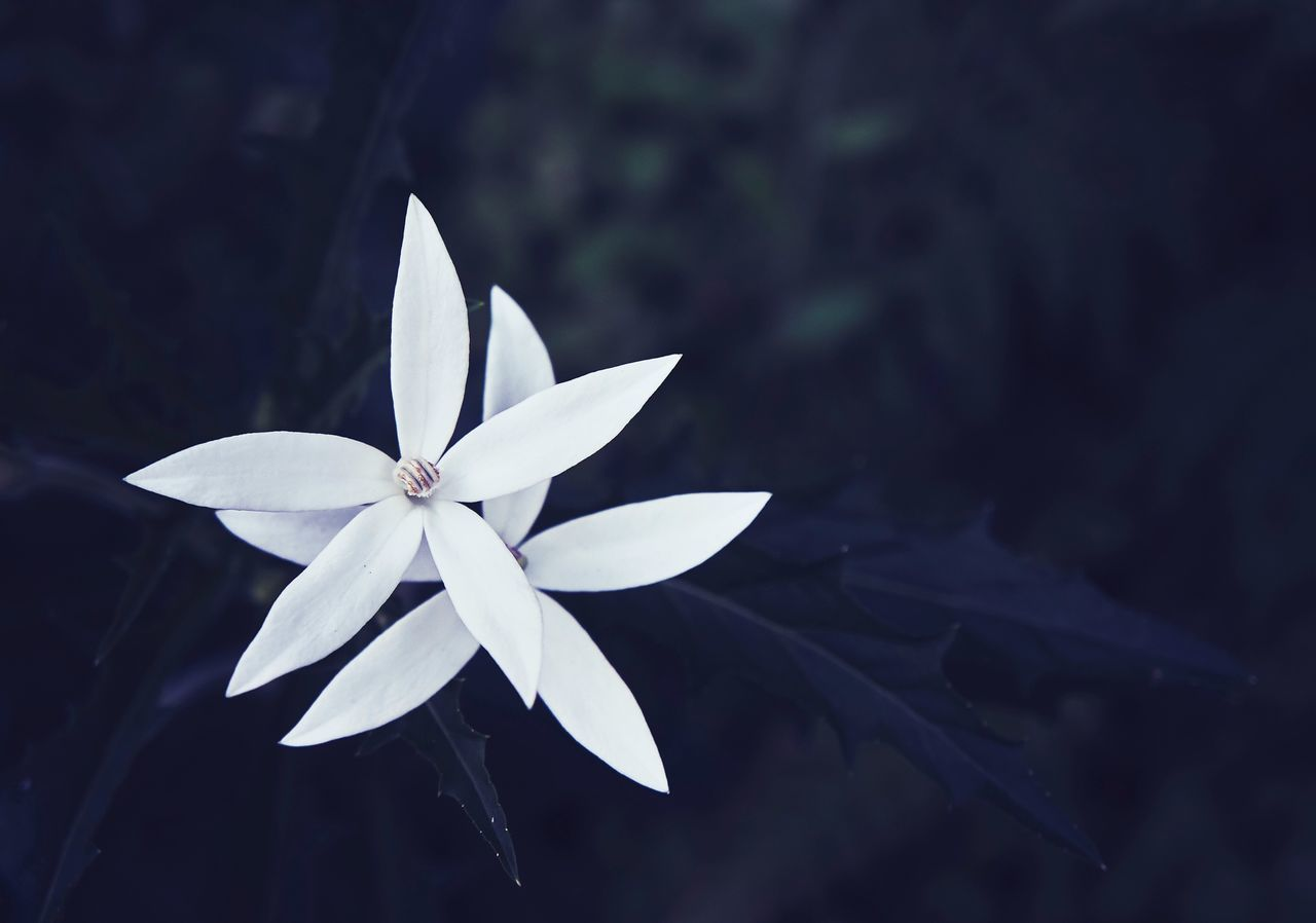 Growth Nature Fragility Flower Head Flower Petal No People Close-up Beauty In Nature Freshness Day Outdoors