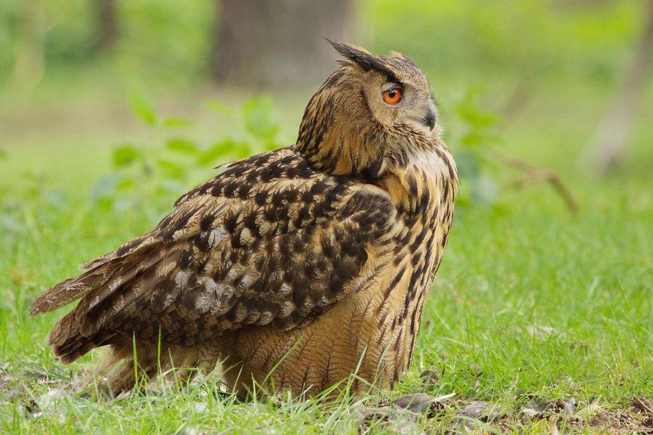 Beautiful stock photos of adler,  Animal Wildlife,  Animals In The Wild,  Bird,  Bird Of Prey
