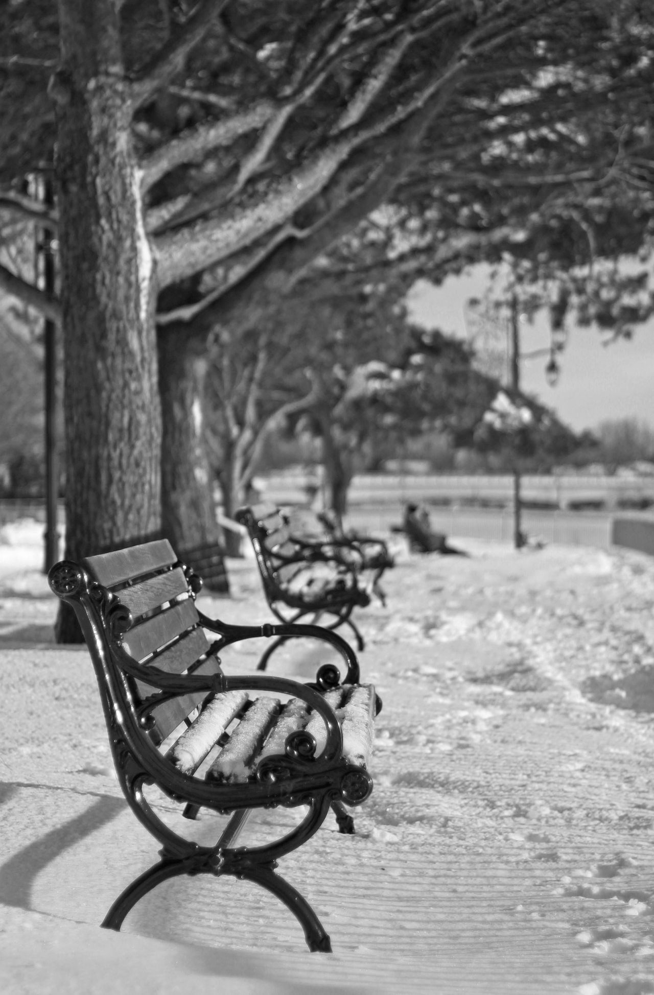 Bench Chair Close-up Cold Wheather Day Empty Nature No People Outdoors Park Snow Table Tree Winter