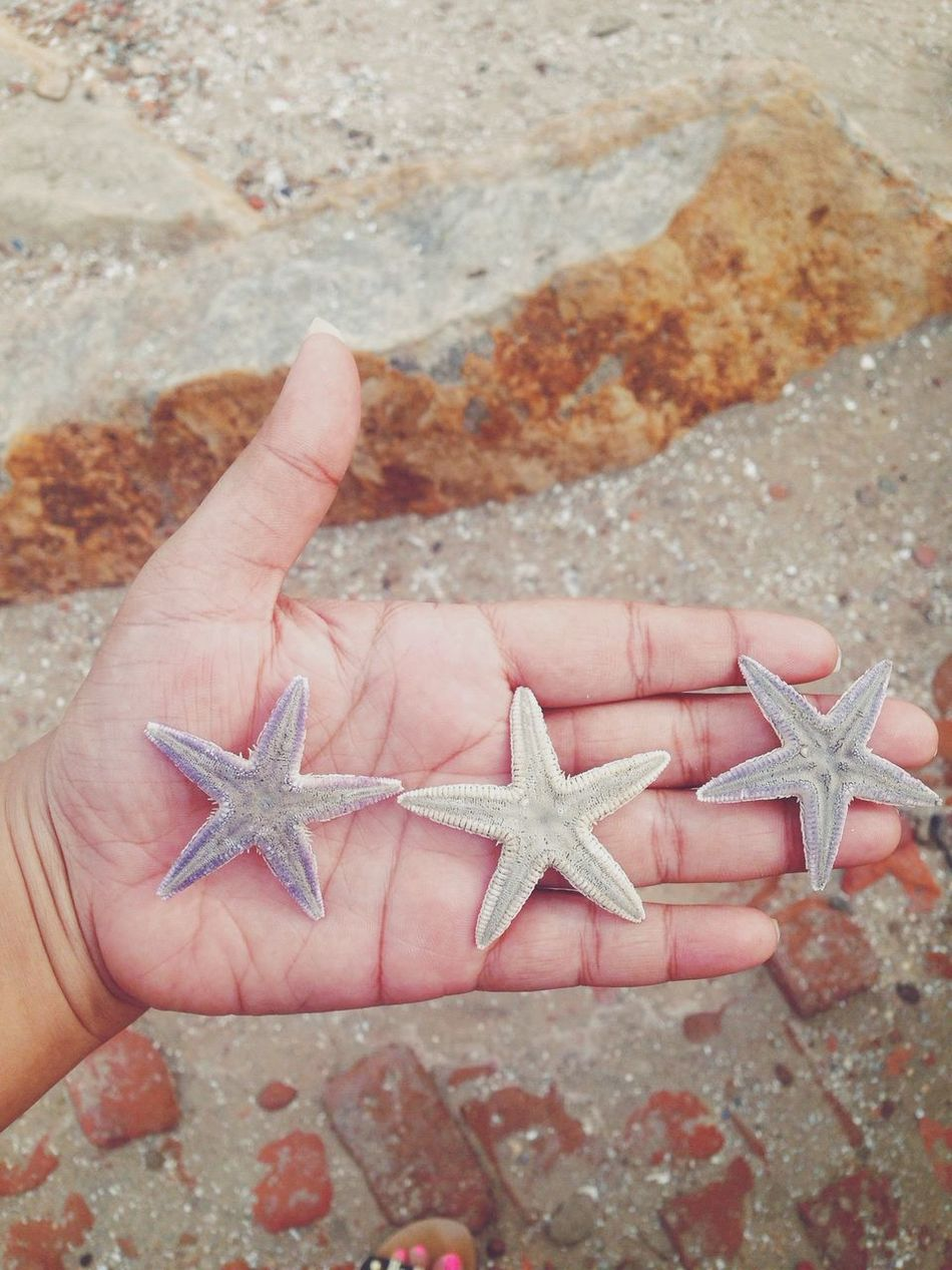 Beautiful stock photos of starfish, Animal Themes, Animals In The Wild, Beauty In Nature, Day