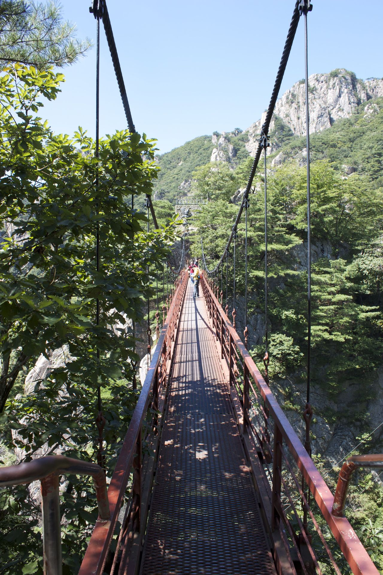 Suspension bridge on Daedun, S. Korea Adventure Beauty In Nature Day Footbridge Forest Green Color Hiking Mountain Nature Outdoors Rope Bridge Scenics Suspension Bridge The Way Forward Travel Tree