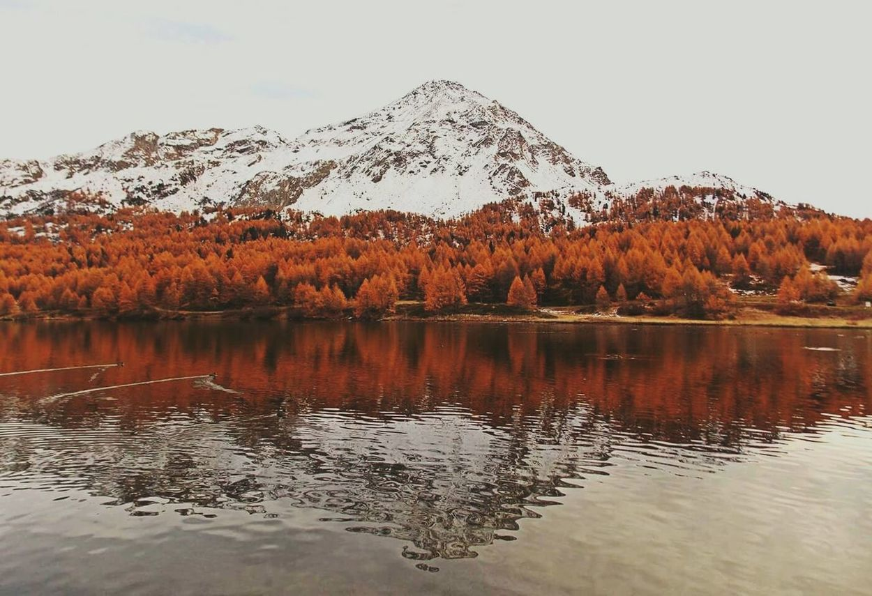 Riflessi Reflection Reflections Swiss Switzerland Swiss Alps Alps Nature Hello World Lake Explorer Mothernature Orange Peace And Quiet Beautiful Autumn Colors Landscape Travel View Mountains Natural Beauty Beauty Amazing View Enjoying Life Wildlife & Nature Wildlife