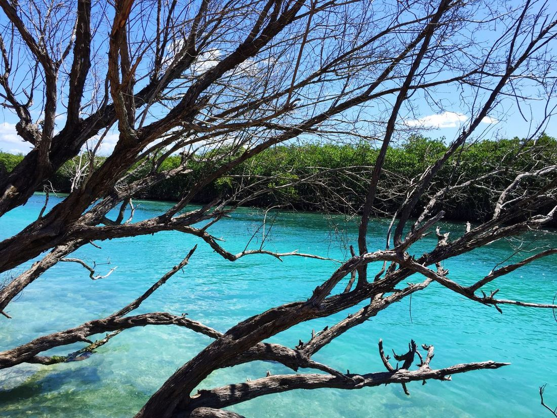 Water Nature Beauty In Nature Tranquility Outdoors Tranquil Scene Tree Trunk Beach Tree Sky Blue Wave Turquoise Water