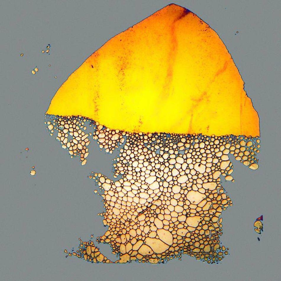 Art Is Everywhere Mushroom My Art Break The Mold