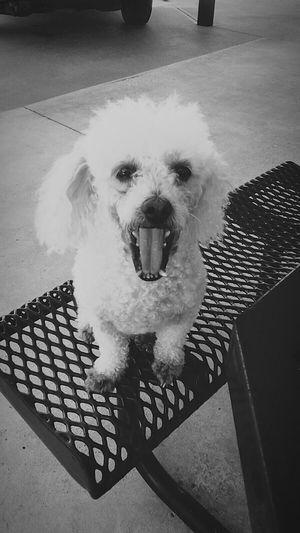 Mouth Open Crazydog Dentist Visit Hunger Games Nofoodforyou
