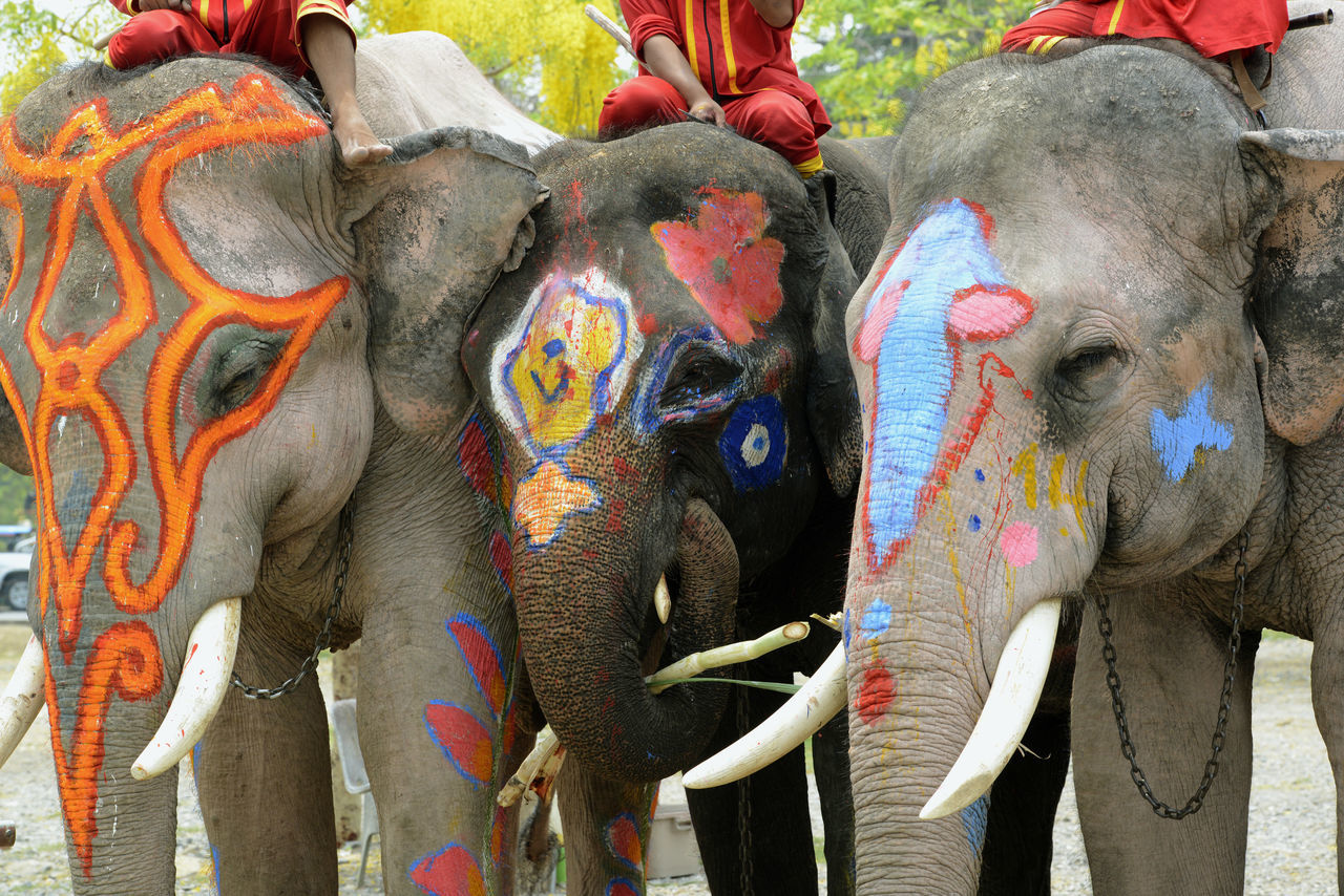 People Sitting On Decorated Elephants