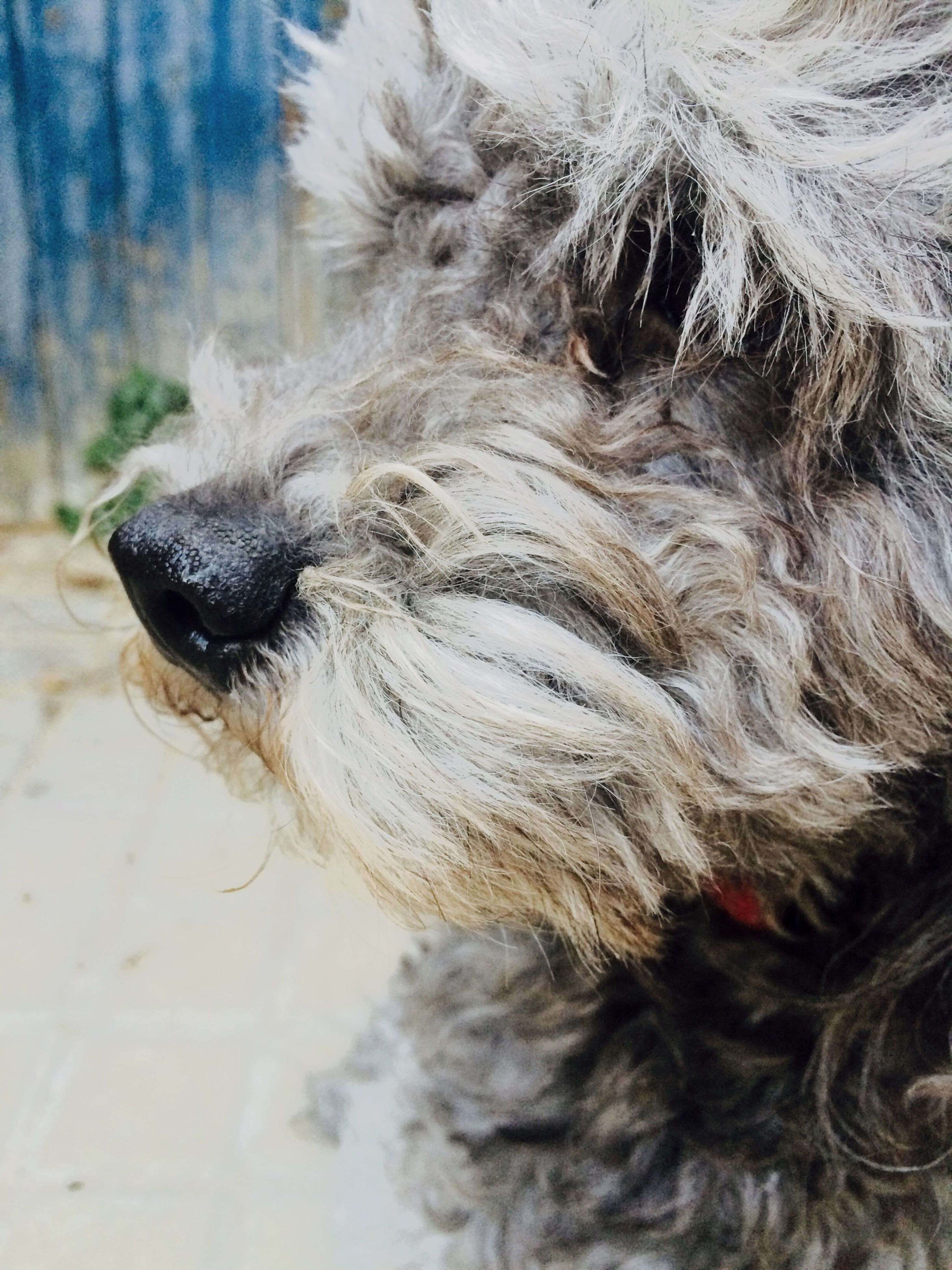 animal themes, one animal, mammal, pets, animal hair, domestic animals, dog, wildlife, animals in the wild, close-up, animal head, animal body part, zoology, no people, focus on foreground, day, animal, front view, high angle view, looking away