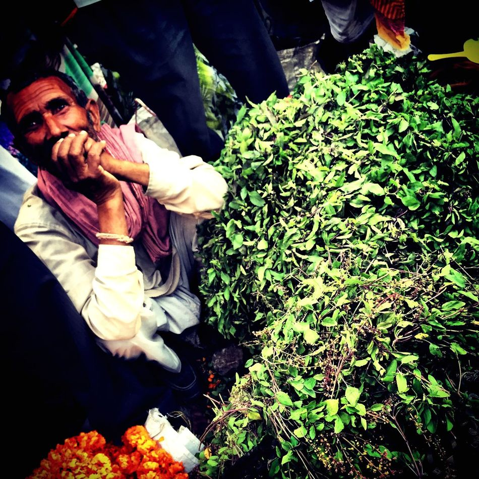 Flower Flowers Tulsi HolyBasil Market Varanasi