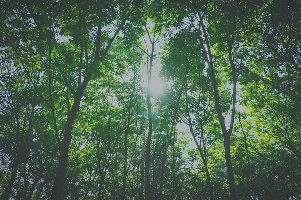 Tree Nature Growth Green Color Low Angle View Beauty In Nature No People TranquilityDay Outdoors Rubberplantation Rubberestate Backgrounds Sky Scenics Lush - Description EyeEmNewHere EyeEmNewHere