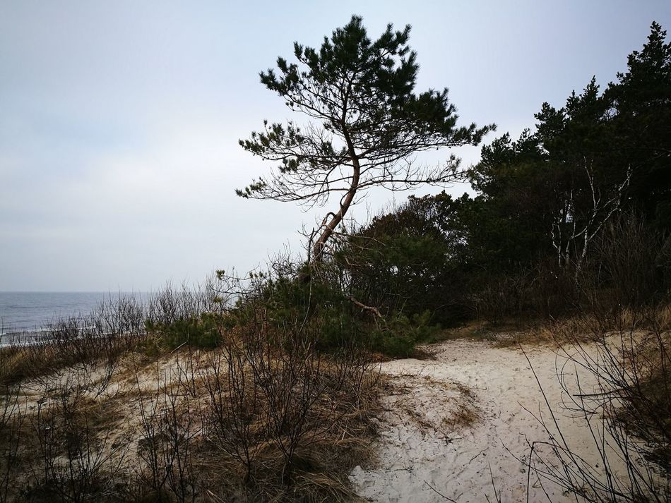 Tree Nature Landscape Wilderness Tranquility No People Outdoors Sea Beauty In Nature Day Single Tree Growth Scenics