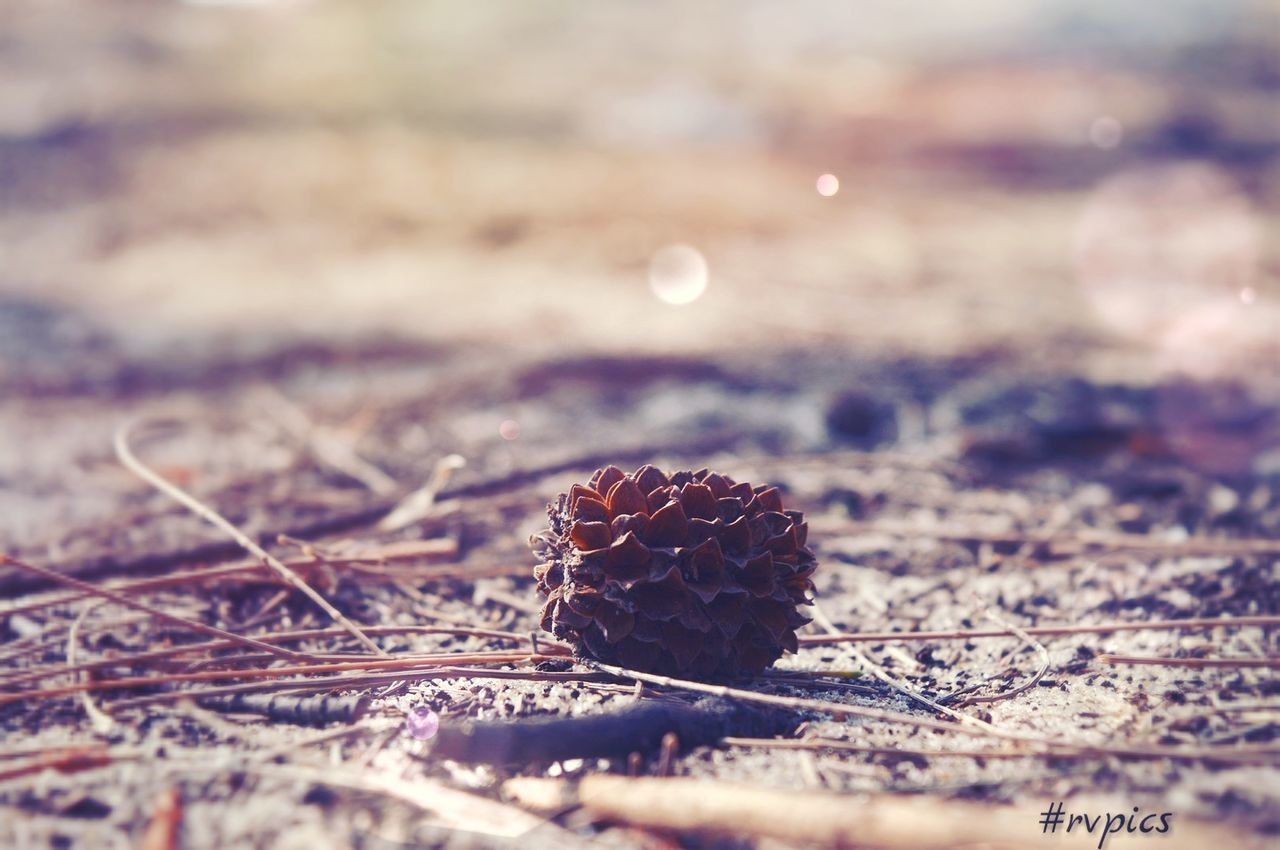 selective focus, no people, close-up, nature, day, outdoors