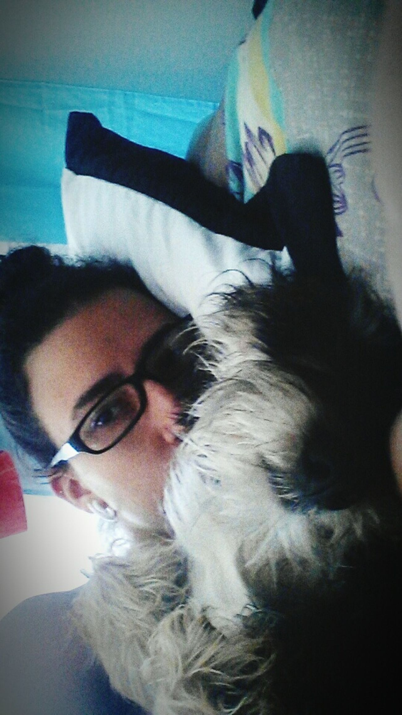 Perro Mestizo Amor