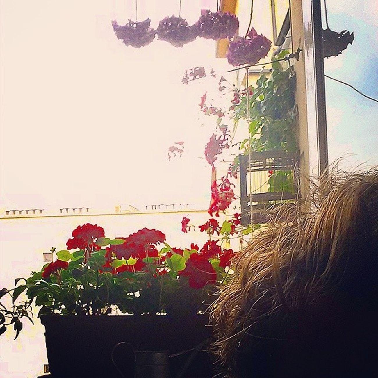 Adoro Aggiornamento Saturation Flower jadore treschic tresor InstaTO instatop luxury light windows widow instalife like4like picoftheday legendarylover katy prism rainbow sky home followback