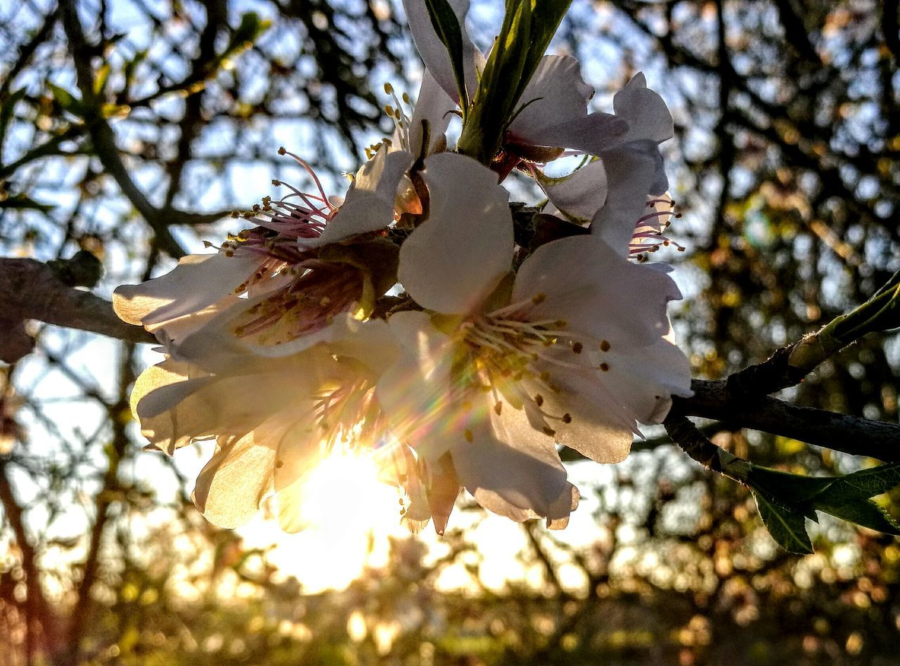Sunlight meets Almondflowers... Tree Nature Growth Outdoors Beauty In Nature Close-up Branch No People Day Low Angle View Sunbeam Sky Flower Head Freshness GetbetterwithAlex PalmaDiMaiorca Originalpicture Springtime Sunlight