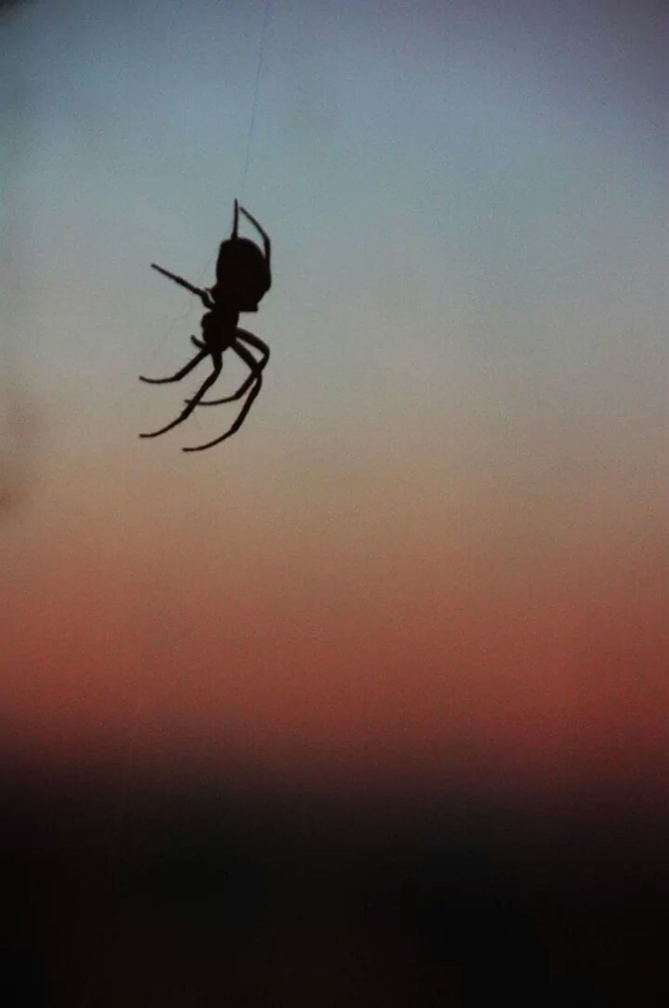Spider Romantic Spider