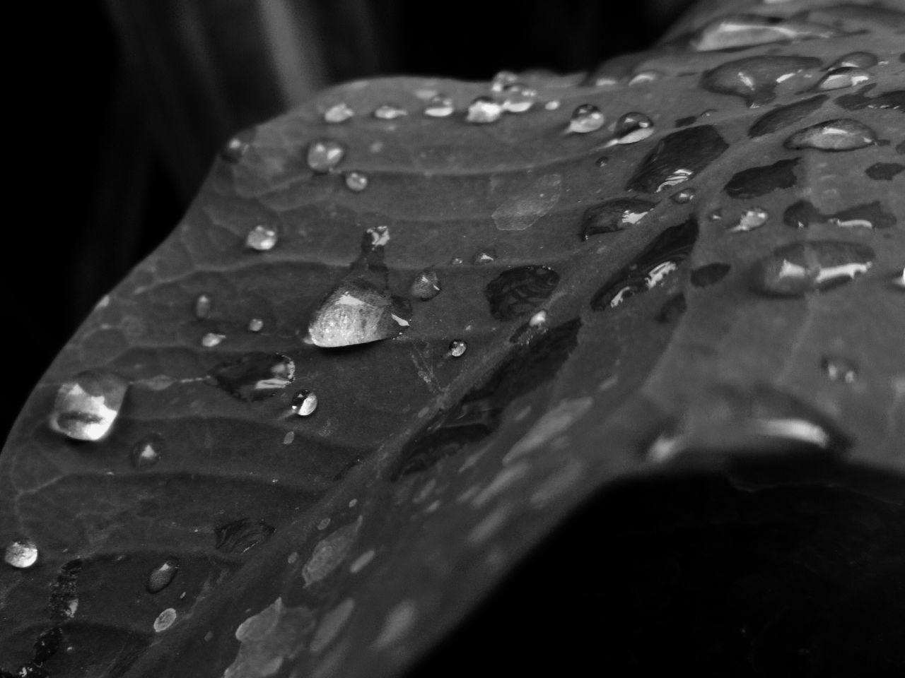 Drop Aiikos Rain.drops Rain Drops Drops Aiikos Garden Waterdrops @aiiko Aiikos Flowers Blackandwhitephotography Aiikos Black.n.white Blackandwhite Photography Black And White Photography Aiikos Heaven Aiikos Paradise Monochrome Leaf Leafporn Leaf 🍂 Leafs Leafes