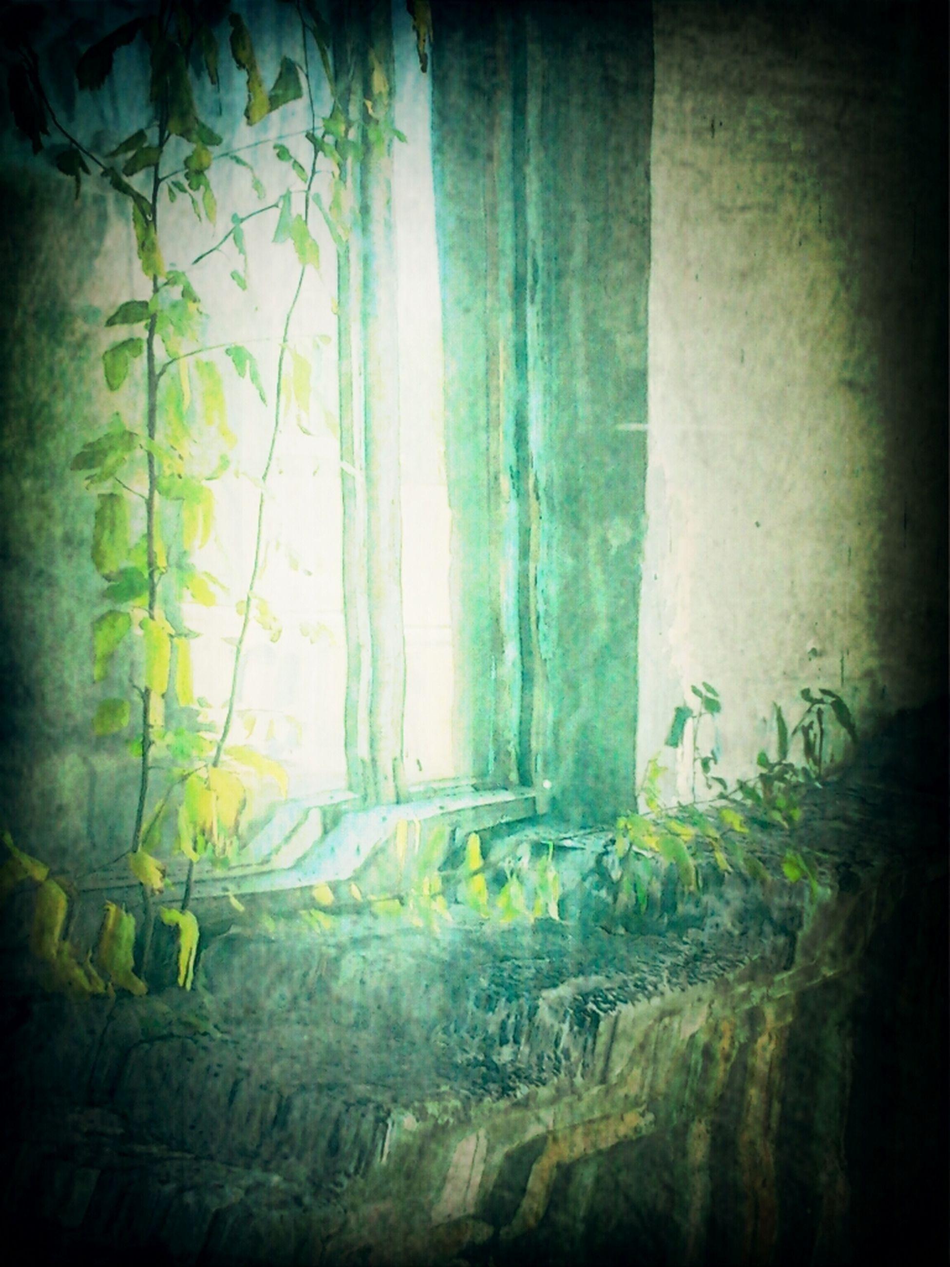 Plant Througe. Window