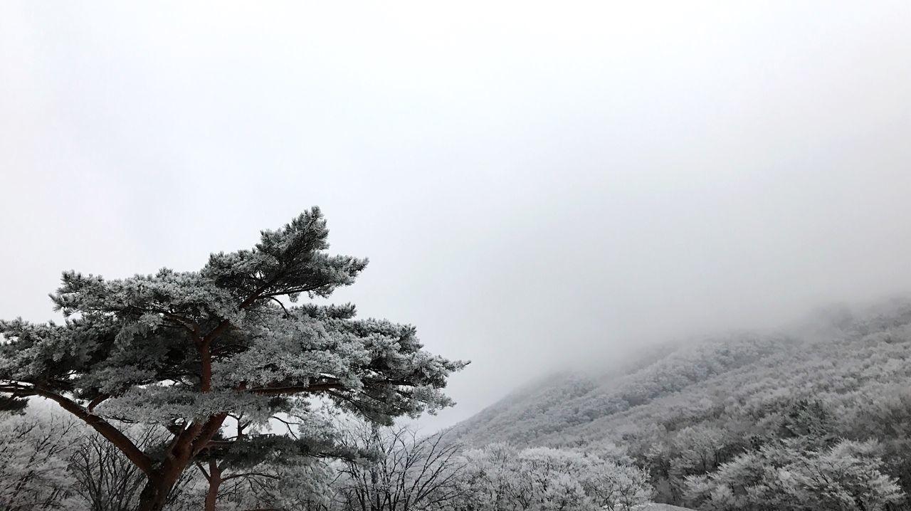 Hallasan Mt Beautiful Snow View Tree Mountain Weather Winter Scenics Jeju Island, Korea