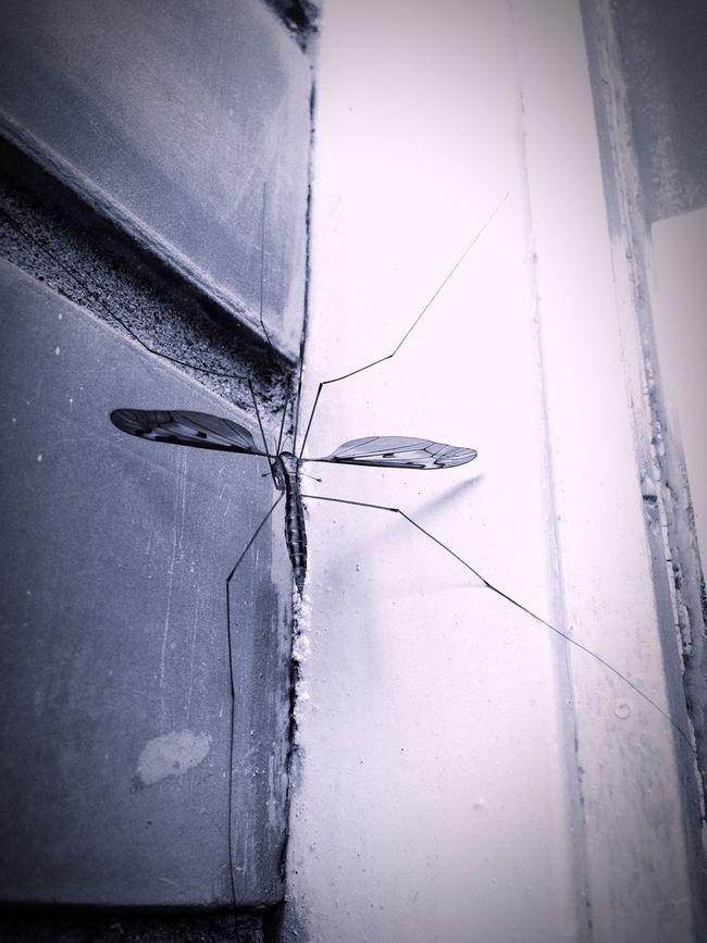 Instagood Mosquito