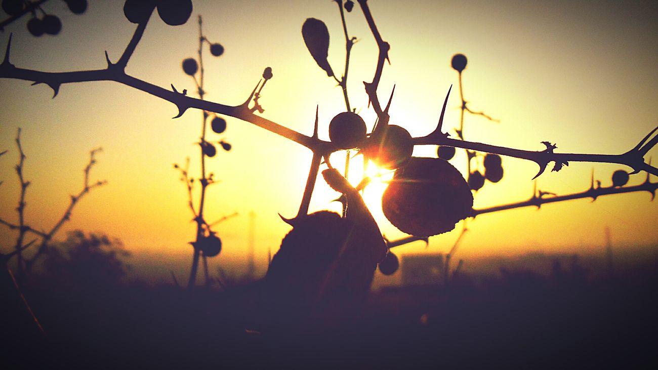 Sunshine ☀ Scenics Sunrise Thorns Feelsogood Positivevibes Sweet♡ Beautiful Nature Photography Photooftheday Edited