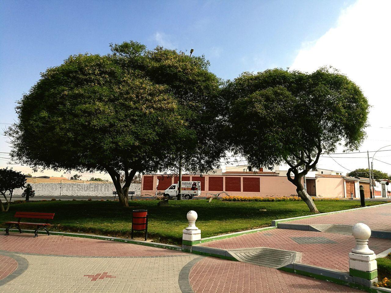 Árbol en ovalu de Pocollay Tacna Tree No People Outdoors Growth Sky Day Nature