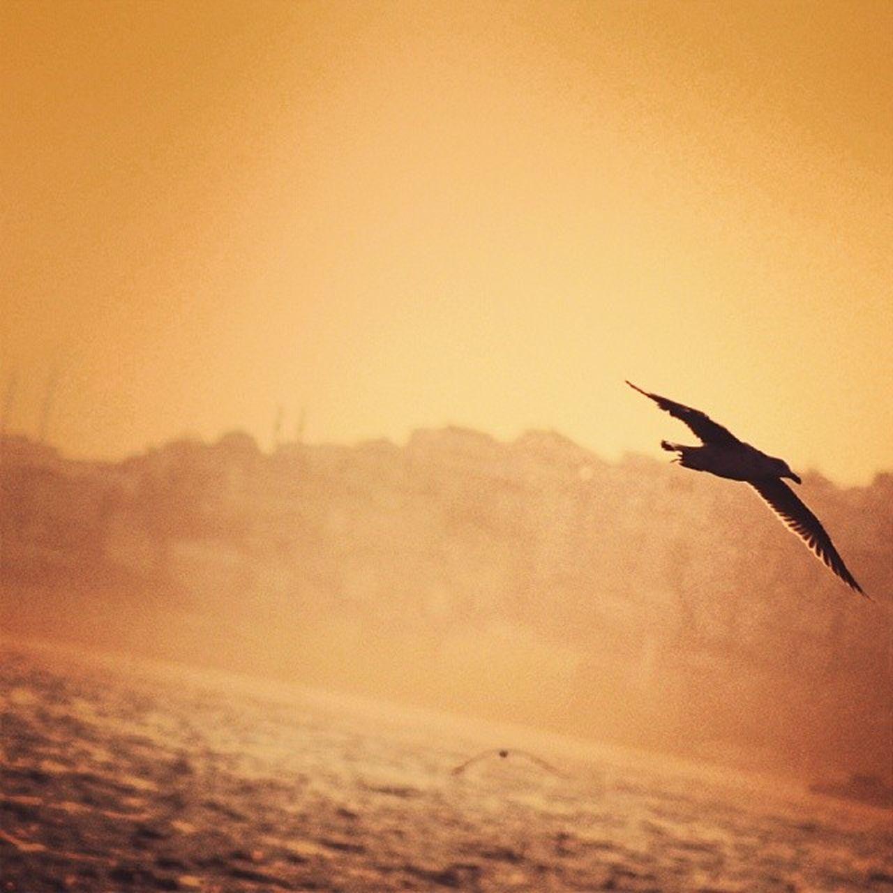 Hayat Kısa, Kuşlar Uçuyor. / Life is Short- Birds Flying. Bosphorus Hayatkisa Kuşlaruçuyor