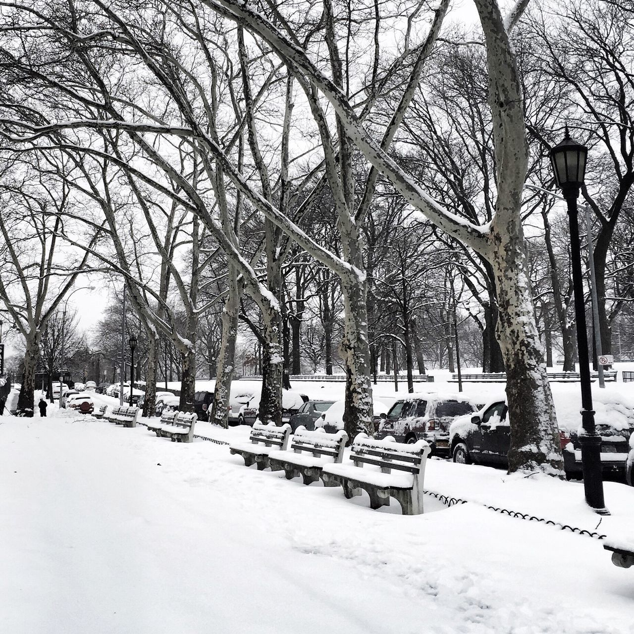 New Yorkork City] New York Winter Snow White The City The Bronx Blizzard Juno