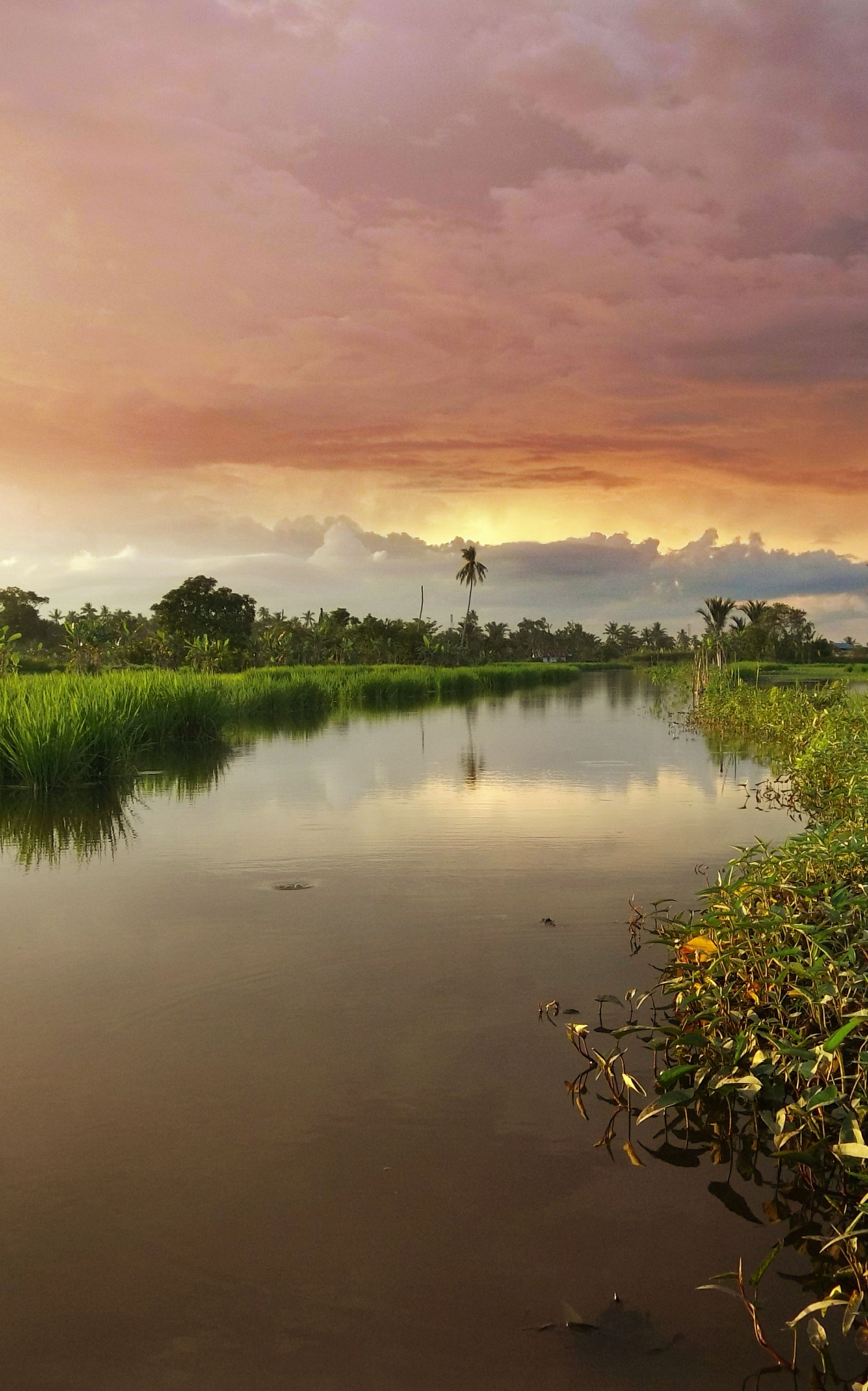sunset, nature, beauty in nature, tranquil scene, tranquility, orange color, scenics, reflection, water, sky, tree, lake, idyllic, no people, outdoors, cloud - sky, plant, landscape, grass, day
