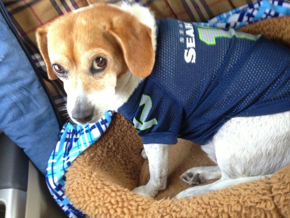 My dog Millie:) Go Hawks Seahawk Dog
