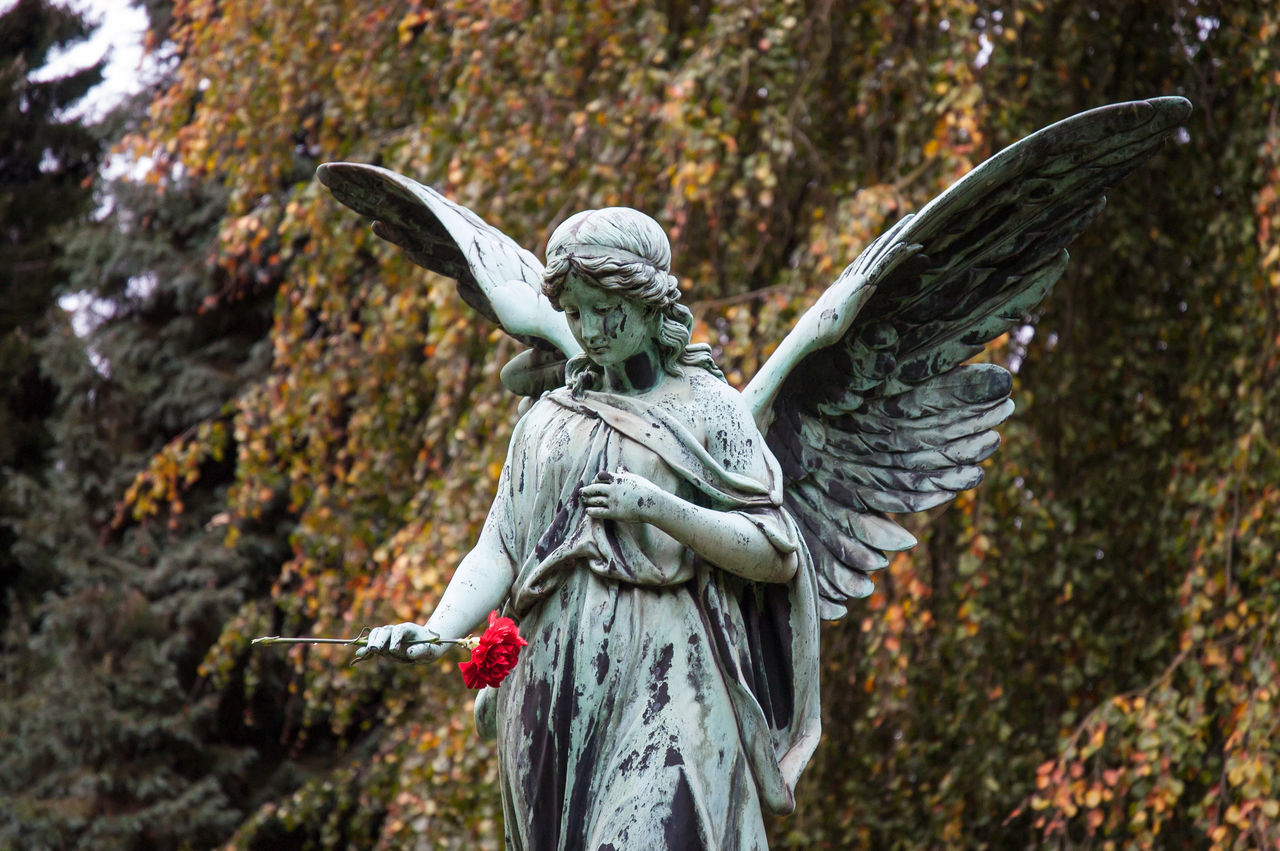 Angel Angel Statue Angel Wings Day Everlasting Love Flower Gray No People Outdoors Sculpture Statue Tree Nikonphotography