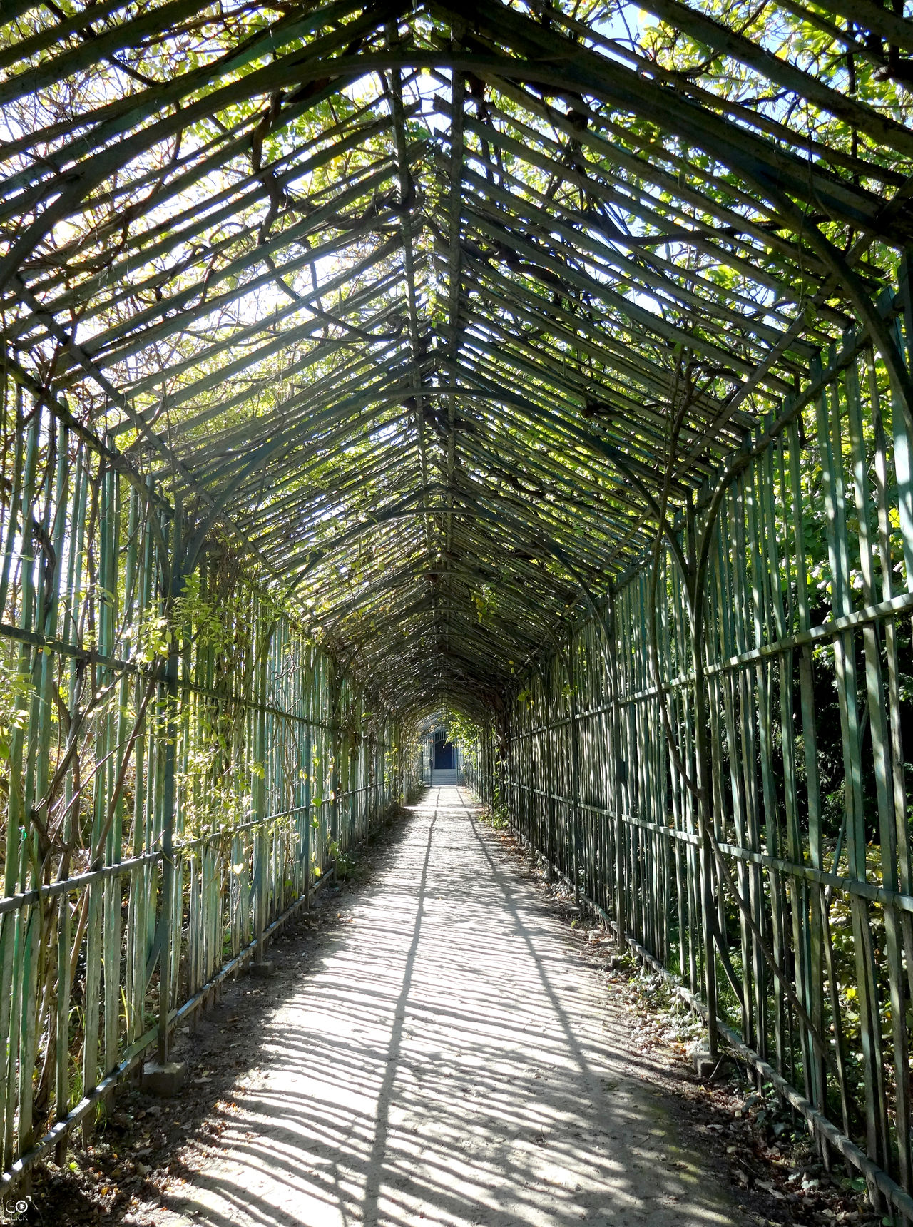 Run Into You Bamboo Grove Daylight Green Green Color Greenhouse Growth Nature Nature Nature Photography Outdoors Perspective Perspectives Photography Shadow Shadows Shadows & Lights Sun Sunlight Symmetrical Symmetry The Way Forward Travel Tree Tree Trees