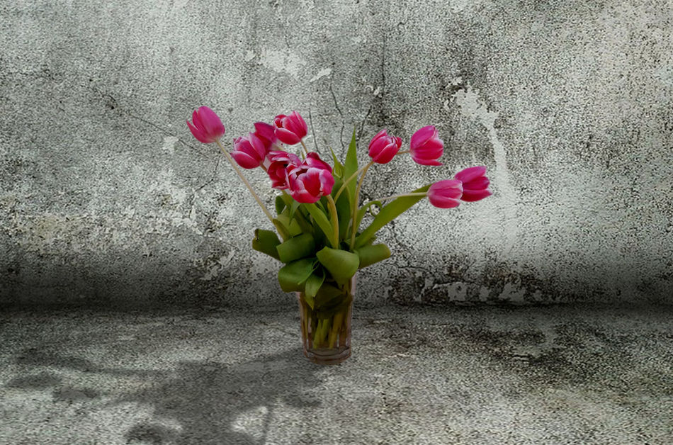 Beauty In Nature Blooming Close-up Day Flower Flower Head Fragility Freshness Growth Nature No People Outdoors Petal Pink Color Plant Indoors  Standing Tulips Flowers Springtime Pink Bouquet