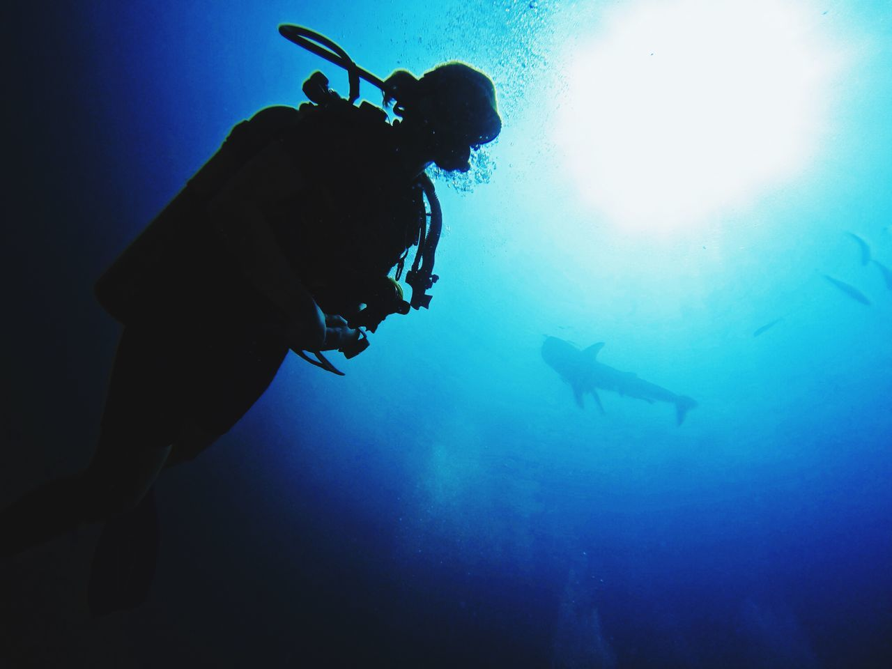 Diving with whale sharks, Koh Tachai, Thailand Diver Taucher Whale Shark Scuba Diving SCUBA Scubadiving Adventure Adventure Buddies Adventures Adventure Time Underwater Underwater Photography Underwater World EyeEm Best Shots Eye4photography  Amazing Amazing View Amazing Place