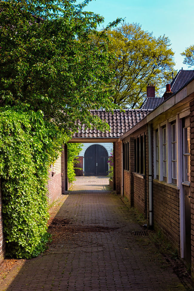 Blue Door At The End Of A Corridor Architecture Built Structure Day Diminishing Perspective Empty Footpath Green Color Growth Leading Long Narrow Nature No People Outdoors Pathway Plant Sky The Way Forward Tranquility Tree Vanishing Point Walkway