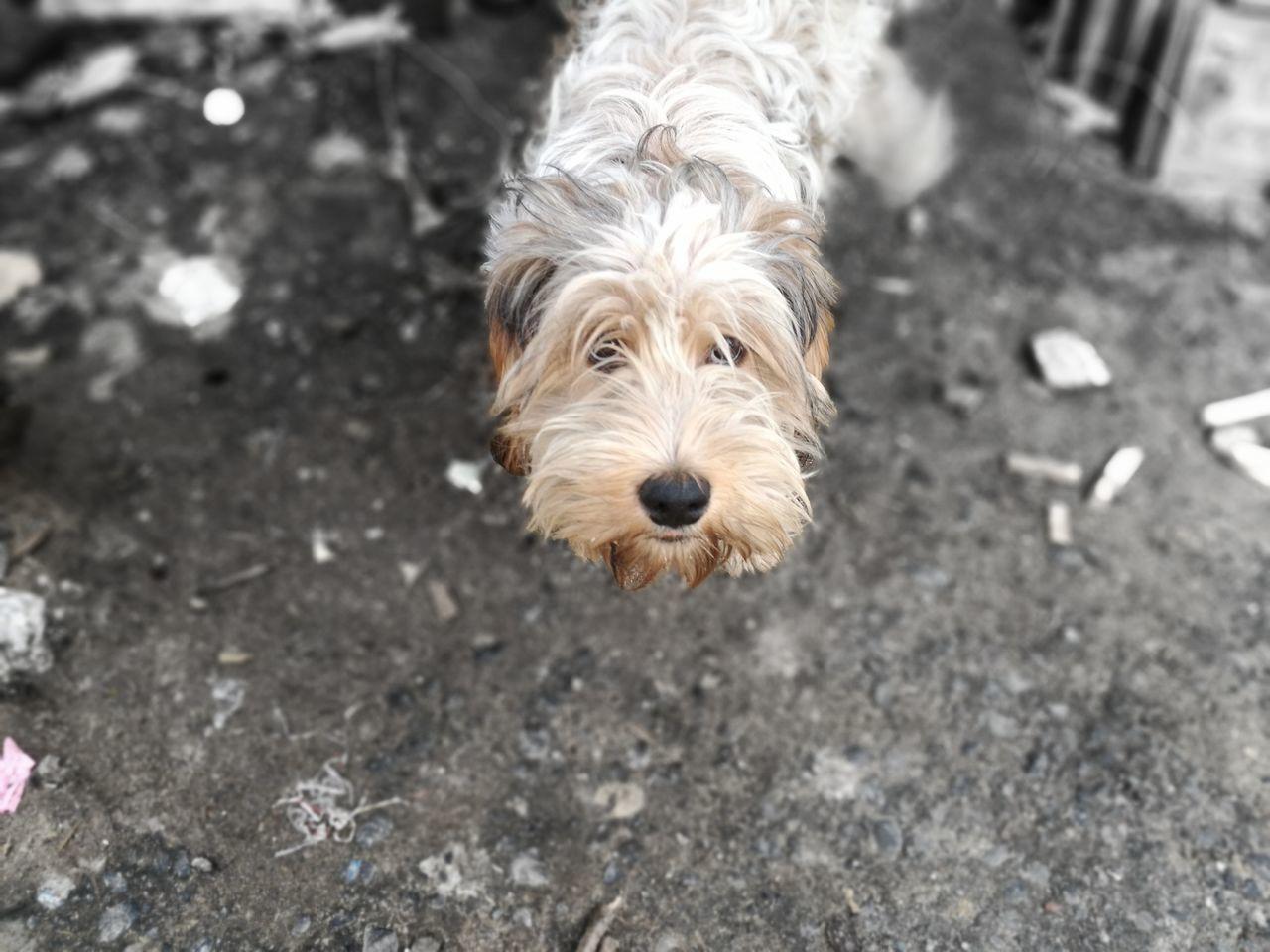 Pet Portraits Dog Love Yo No Fui!!! Lo Juro!!!