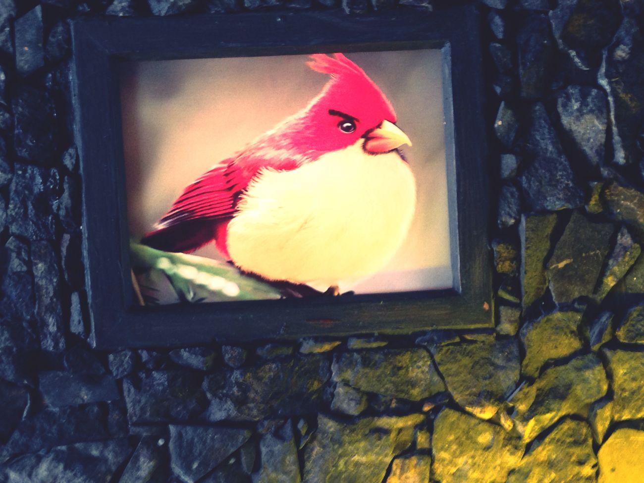Qbar Sevastopol  Birds Red
