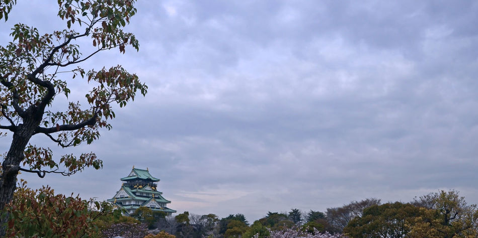 Osaka Castle view from Nishinomaru Garden,During Spring Architecture Branch Castle View  Cloud - Sky Day Japan Nature OSAKA Osaka Castle, Japan, Sky Sky And Clouds Tree