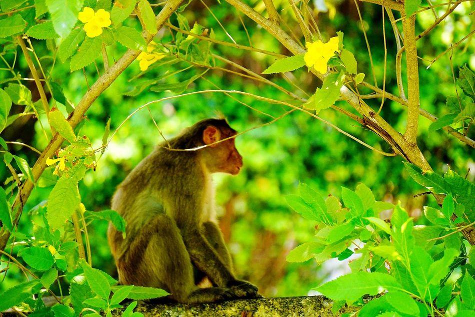 Monkey HotSummers Rajbhavan Nook Eyeem Photography EyeEm Team Heat Treeshade Animal Themes