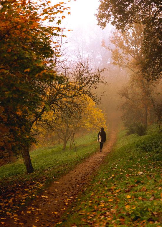 Autumn 2015 Autumn Collection Autumn Colors Autumn Leaves Autumn🍁🍁🍁 Fall Beauty Fall Colors Fall Leaves Fall_collection Into The Woods Intothewild Parklife Walk Walks Winkworth Arboretum Winkwortharboretum Winkworth