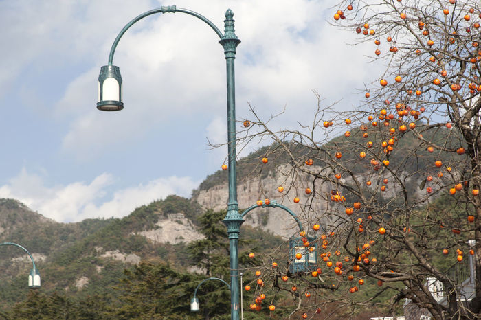 autumn at Naesosa in Byeonsan, Buan, Jeonbuk, South Korea Architecture Autumn Autumn Colors Day Fall Lighting Equipment Mountain Naesosa Nature No People Outdoors Persimmon Sky Street Lamp Street Light Tree