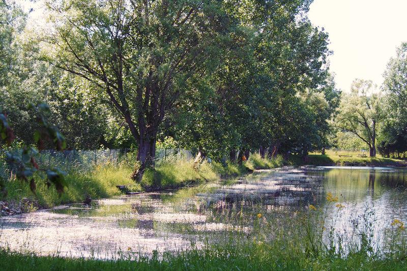 An afternoon near a fishing pond. Idyllic Lake Lakeshore Landscape Tranquility Tree Water