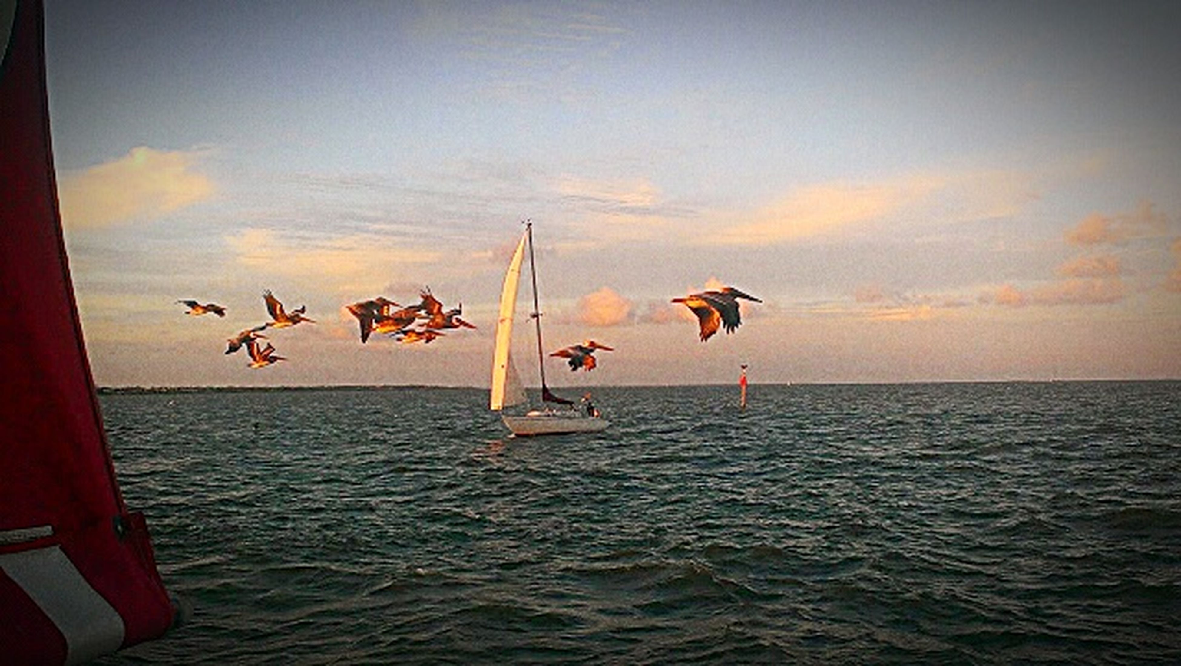 sea, water, flying, animal themes, animals in the wild, sky, waterfront, bird, wildlife, horizon over water, sunset, transportation, nautical vessel, mid-air, cloud - sky, nature, medium group of animals, beauty in nature, spread wings