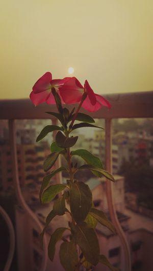 Freshness Beauty In Nature Green Leaves Sunrise Flowers