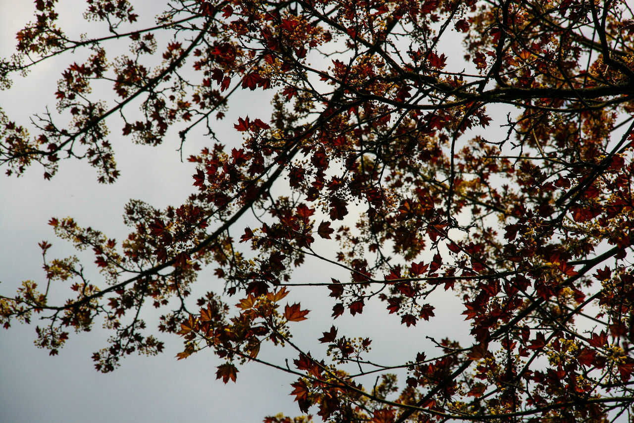 tree, nature, growth, branch, beauty in nature, low angle view, leaf, no people, outdoors, change, autumn, day, flower, fragility, clear sky, sky, freshness