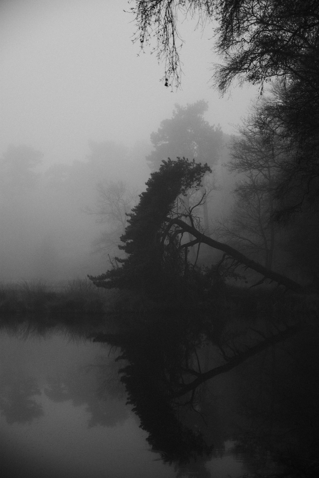 Overasseltse Vennen, Nijmegen. Tree Nature Water Tranquility Beauty In Nature Fog Sky Scenics Tranquil Scene Hazy  Growth No People Idyllic Landscape Lake Mist Outdoors Branch Day Check This Out Beautiful The Week Of Eyeem Nature_collection EyeEm Nature Lover Hello World